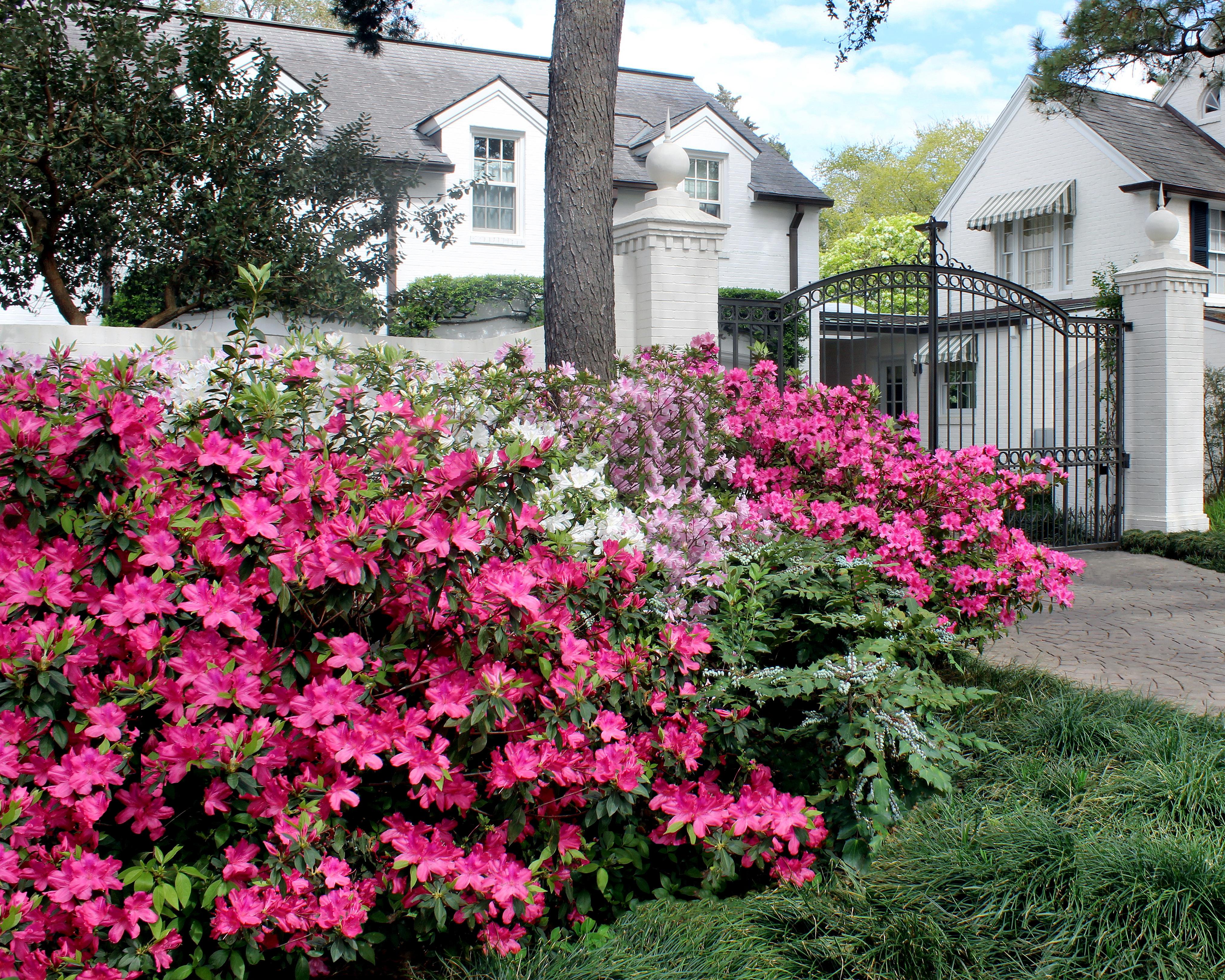 The Houston Gardener – Spring 2018