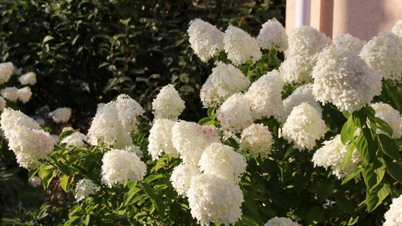 River Oaks Blossom Club